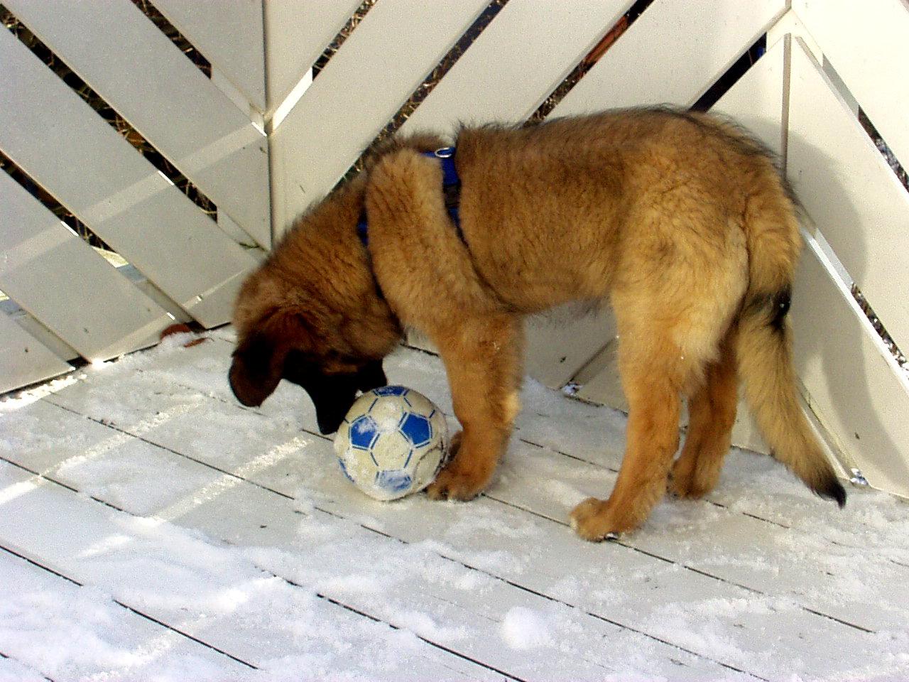 rrrrrrr-dieser-ball