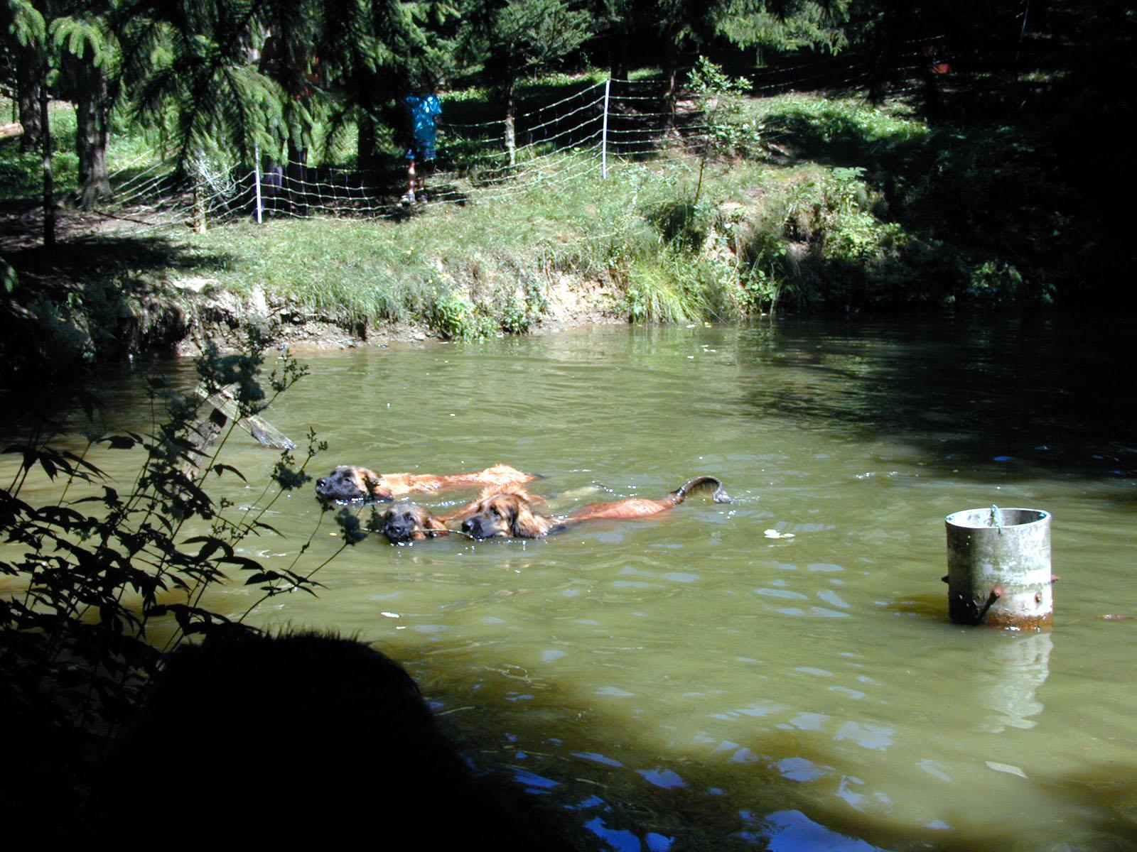 ps_12-wettschwimmen