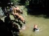 ps_10-vorschwimmen